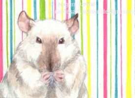 Squeaky Clean ACEO by Pannya