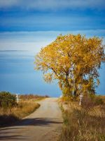 Crossing Into Autumn by WayneBenedet