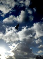 bird in sky by RCrilly