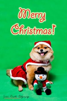 Merry Christmas Dog by pinay-malaya