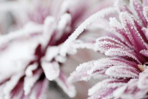 Frosty flowers by emshh