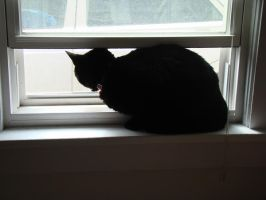 1st open window of the year by VixenRapture
