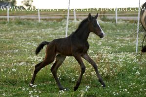 WB Filly 3 by Colourize-Stock