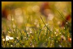 Bokeh en folie by Sloorth
