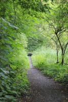 Path Stock 2 by Solanaceae85