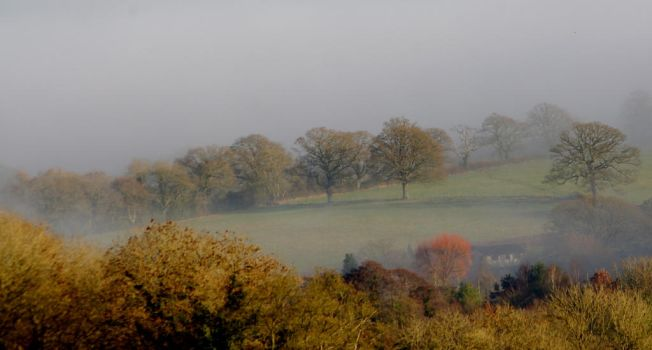 A Misty Morn by stevepoxon
