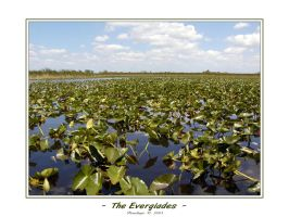 - The Everglades II - by penelopew