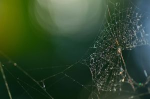 Bokeh Web by MystEryuNwanTed