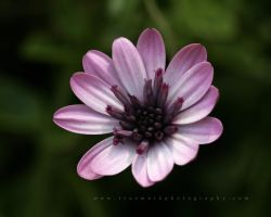 California Floral by andras120