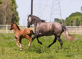 Mi Querida and Allegro by Deirdre-T