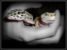 Leopard Gecko IV by Tula-Montage