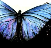 Butterfly Wings by jy0ti
