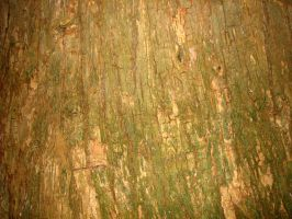 Texture _ Wood 1 by Sweetpepper-stock