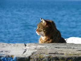 Mediterranean cat by Jancus