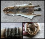 Eastern Chipmunk Pelt by CabinetCuriosities