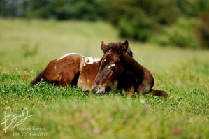 Foal. . by ivecus