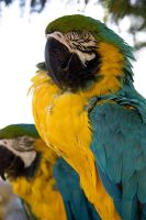 Parrots by Weatherstone