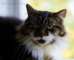Tough Life by MadamMewMew