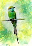 Green Bee Eater by TomSchmitt