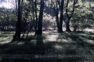 100 Themes - 03 Light by SkunkHat