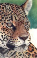 Jaguar by EliN-lianoR