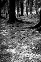 BW Trees 2 by Keith-D
