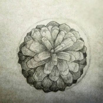 Pinecone analysis for an assaiment by Vorrch