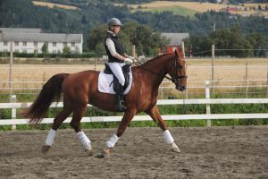 Dressage 6 by Chance-STOCK