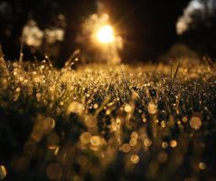 Nature's Gold Dust by LittleMissMilly