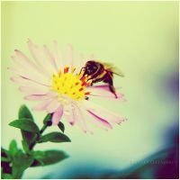 Mr Bee by estellamestella