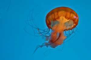 red jelly by mange