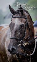 Horse Racing 550 by JullelinPhotography