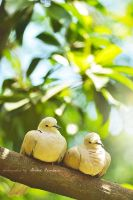 two little birds by valbury
