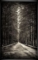 The road not taken... by ansdesign