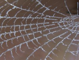 Frosty Spider Web 3 by Tech-Dave