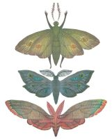 Saturn Moths by V-L-A-D-I-M-I-R