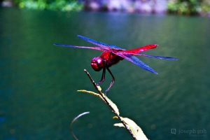 Dragonfly 02 by josgoh