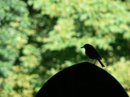 Robin Redbreast by e-s-d
