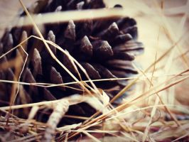 It's always pine cones with you. by Mollycoddled