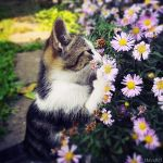 Flowers smells great by ZoranPhoto