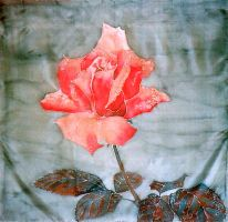 rose on silk by siskin