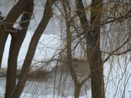 Wisconsin Winter 3 by VixenRapture