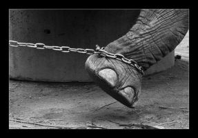 Chained Life by aaronkor