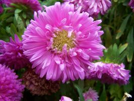 Stock Purple Flower by Sheiabah-Stock