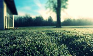 New Grass by Kalenchaos