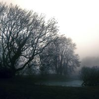 Kirkcudbright: trees in mist1 by Coigach