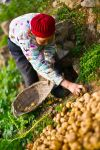 The Old Farmwoman by joebbowers