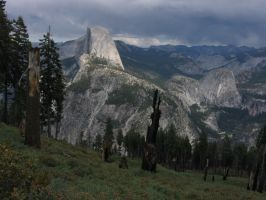 Half Forest, Half Dome by JustinArt87