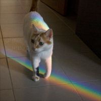 Cat on rainbow by carnedepsiquiatrico