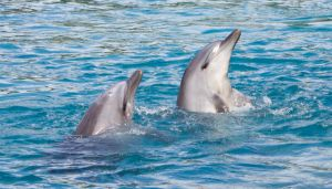 STOCK - Seaworld 2013-40 by fillyrox